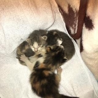 3匹の子猫の里親募集です!