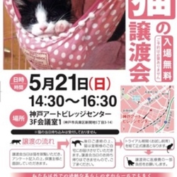 猫の譲渡会 サムネイル1