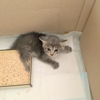 生後約1ヶ月ぐらいの仔猫ちゃん