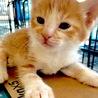 茶白の子猫ちゃん