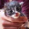 生後2週間ほどのオス猫とメス猫です