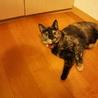 甘えん坊サビ猫の女の子