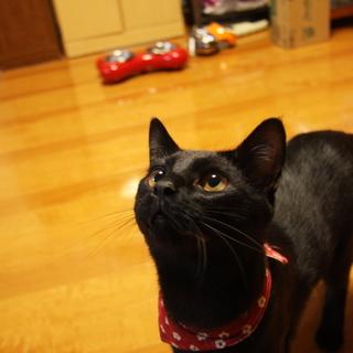 元気な黒猫の男の子