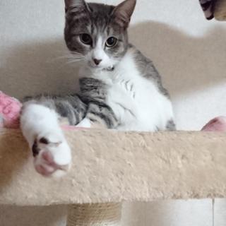 猫ちゃんを貰って下さい。