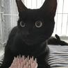 【里親さま決定】黒猫ピータン9ヶ月☆人懐こい男の子