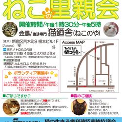 地域猫から社会猫へ・四谷猫廼舎(ねこのや)里親会(ボランティアも募集中)