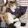 優しいママ猫みけ子 サムネイル3