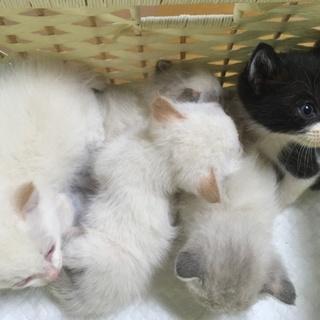 4/3生まれの仔猫です‼︎