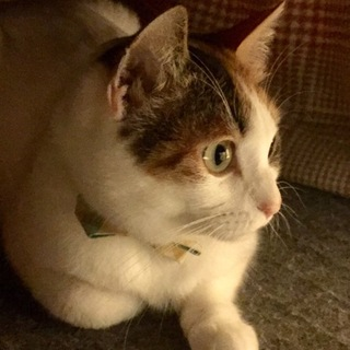 三毛猫のミケ子です。