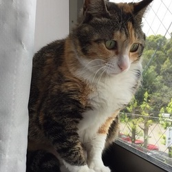 飼い主のいない猫とのお見合い会 緑区徳重にて