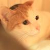 卒業猫のミーちゃん