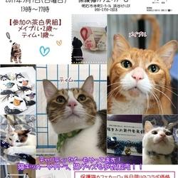 【猫まみれ with カーロ】 茶白男組ふたりぼっちの里親会