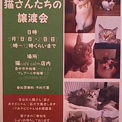 ◎【猫さんたちの譲渡会】大阪府豊中市にて開催!!◎