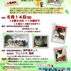 12~15時   神戸元町 猫の譲渡会(NPO法人神戸猫ネット&㈱フェリシモ猫部ち)