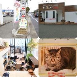 神戸西区玉津 『猫のお見合い会』13 :00〜15 :00