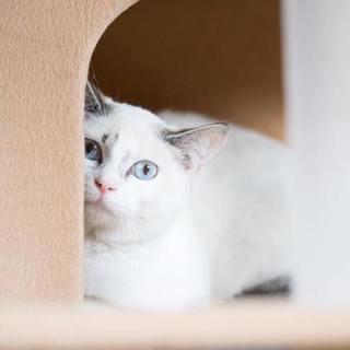 水愛(あくあ)☆透き通るブルーの瞳をした女の子