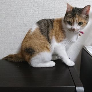 【急募】人懐っこい猫の里親募集!