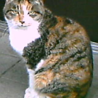 恐らく老猫 誰にでも懐いて抱っこされる03