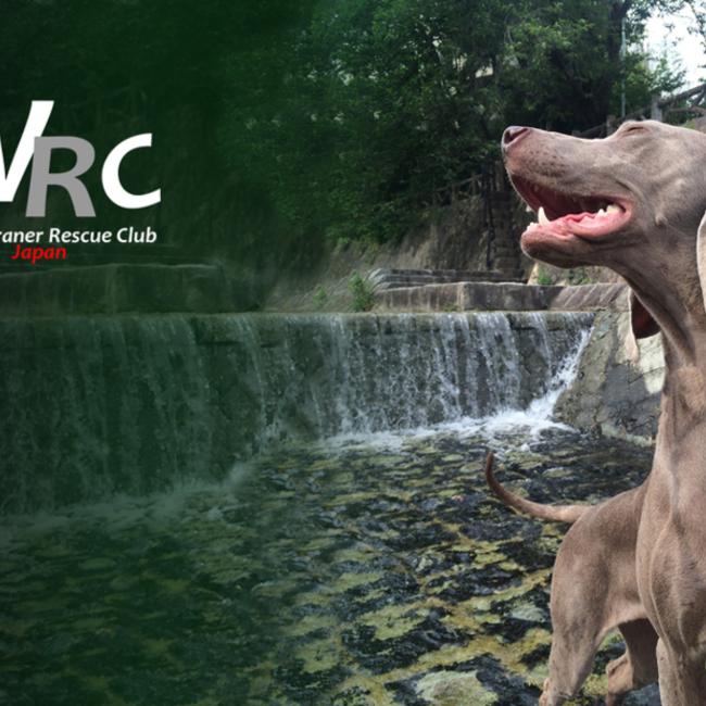 WRCワイマラナーレスキュークラブのカバー写真