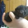 産まれたばかりの子猫