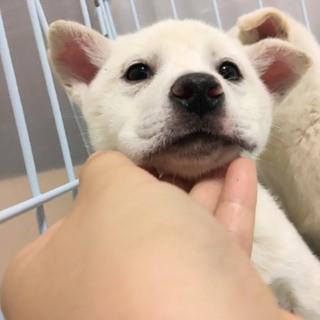 愛媛県動物愛護センターから引き出した仔犬No.2