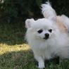小型犬男の子ーおかげ様で素敵なご縁が見つかりました