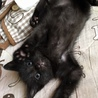 キュートな黒猫、アポロくん♡