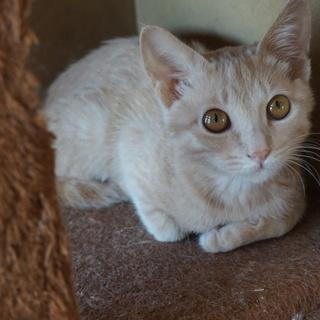 洋猫MIX、かわいいゆずくん、医療・しつけ済