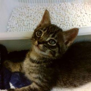 ⑥目がクリクリ保護猫。ずっとのおうちを探してます。