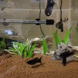 我が家の魚