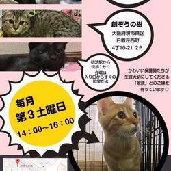 第7回☆ねこのおうちさがし(里親会)/大阪・堺市 サムネイル1