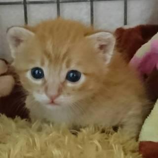 何混ざり??なむっちり子猫2