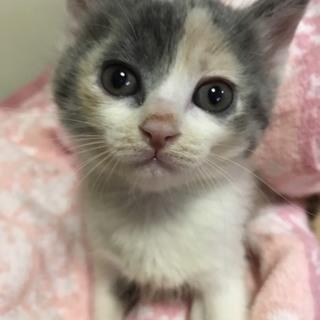 離乳中の子猫予約受付け1