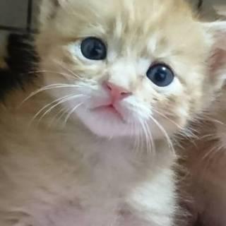 何混ざり?な子猫1