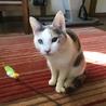 日懐っこい三毛猫です