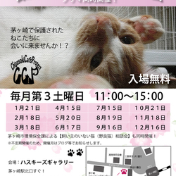 第55回 保護猫たちの幸せ探し会