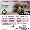 第57回 保護猫たちの幸せ探し会
