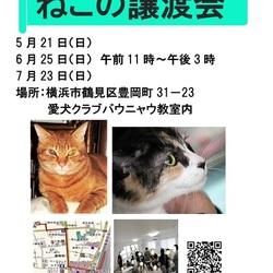 横浜  つるみ・猫のカギしっぽ譲渡会vol.34 鶴見駅徒歩5分