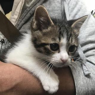 ④命繋がれた仔猫達、ずっとのおうちを探しています。