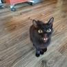 人懐っこい黒猫ちゃん