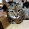 若々しい20歳のオレ様な猫 サムネイル4