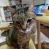 若々しい20歳のオレ様な猫 サムネイル2