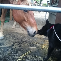ワンと馬ちゃん、とても仲良し♪