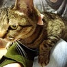 猫管理人さん