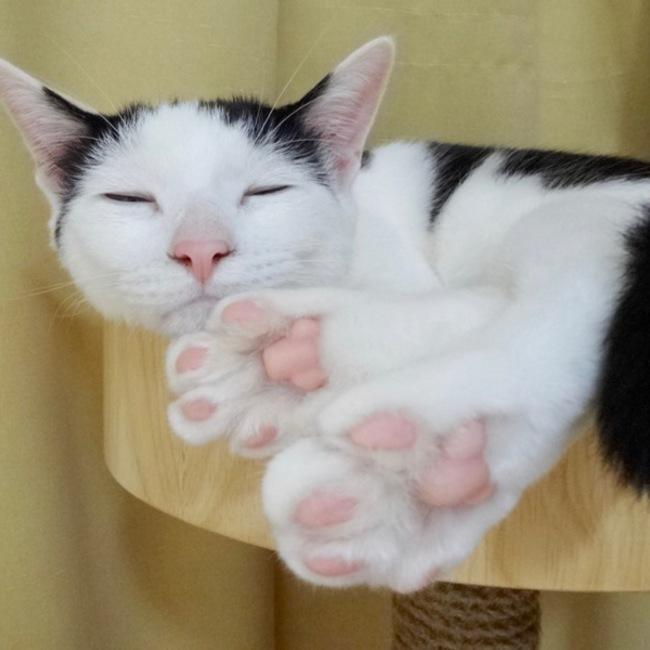 猫なみ〜猫のマリアの活動日誌のカバー写真