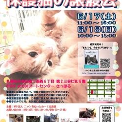 保護猫の譲渡会 NPO法人ニャン友ねっとわーく北海道