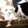 4月5日生まれのmix犬です♪