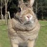 メスのウサギです サムネイル2