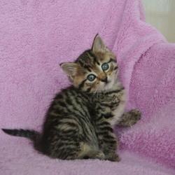 「兄妹と従弟の子猫達です(#^.^#)」サムネイル1