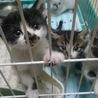 かわいい子猫5匹
